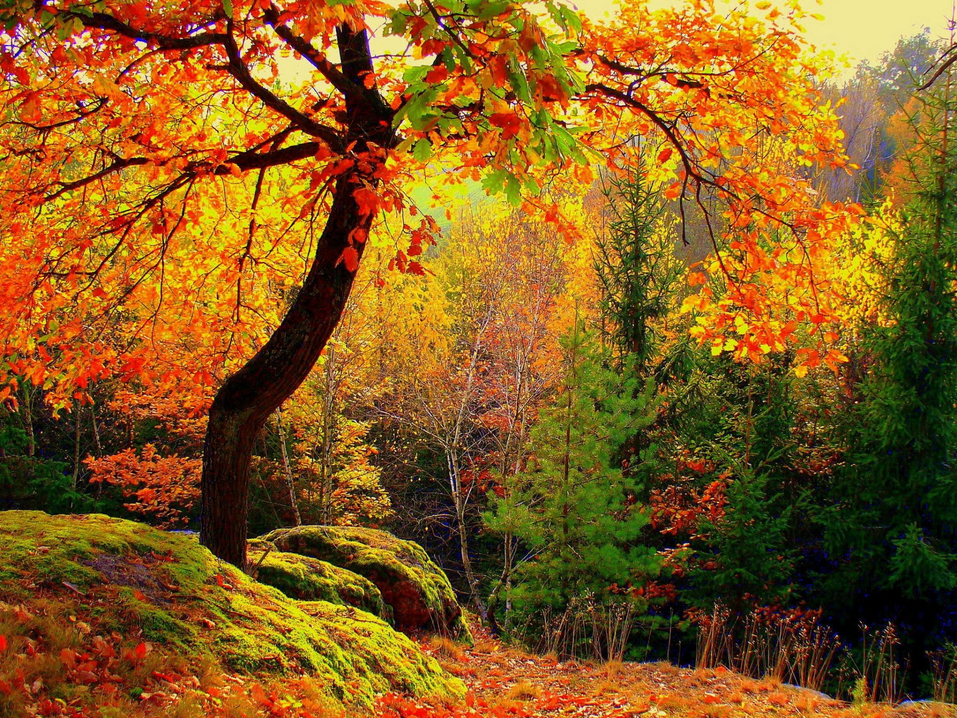 напоминает слитный фото природа осеннего леса стиле неоклассики присущим