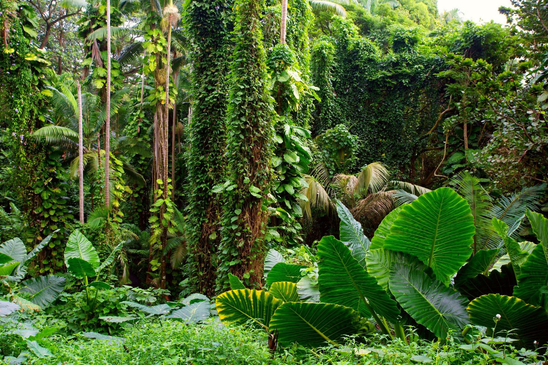 Тропический лес цветы фото