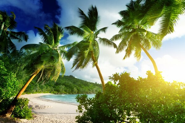 Seychelles Mahe island Takamaka beach tropical paradise beach palms sea ocean sunshine summer vacation пляж море пальмы тропики песок берег