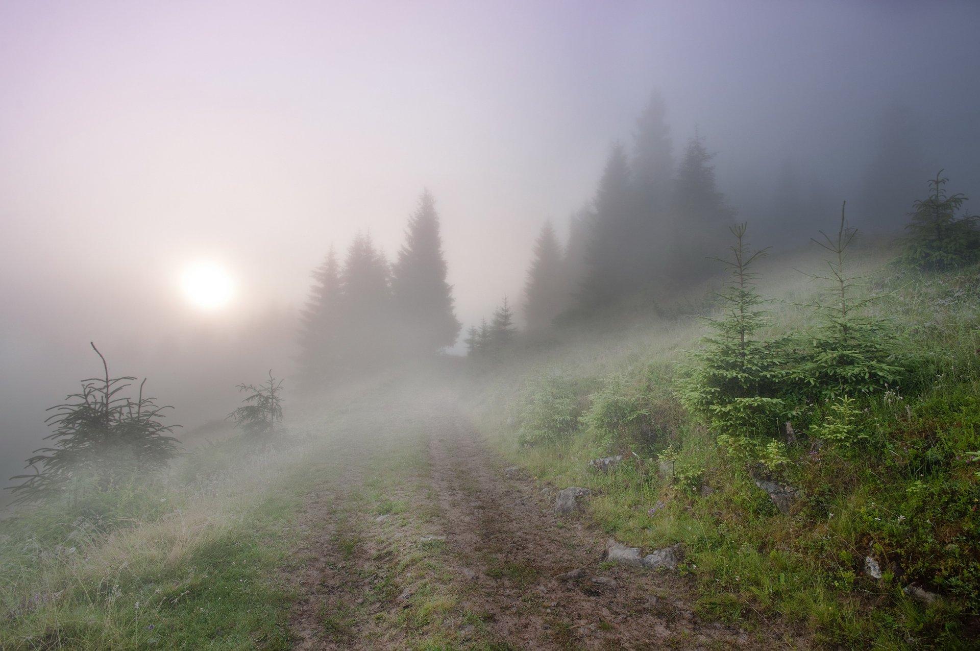 Обои туман, утро. Пейзажи foto 7