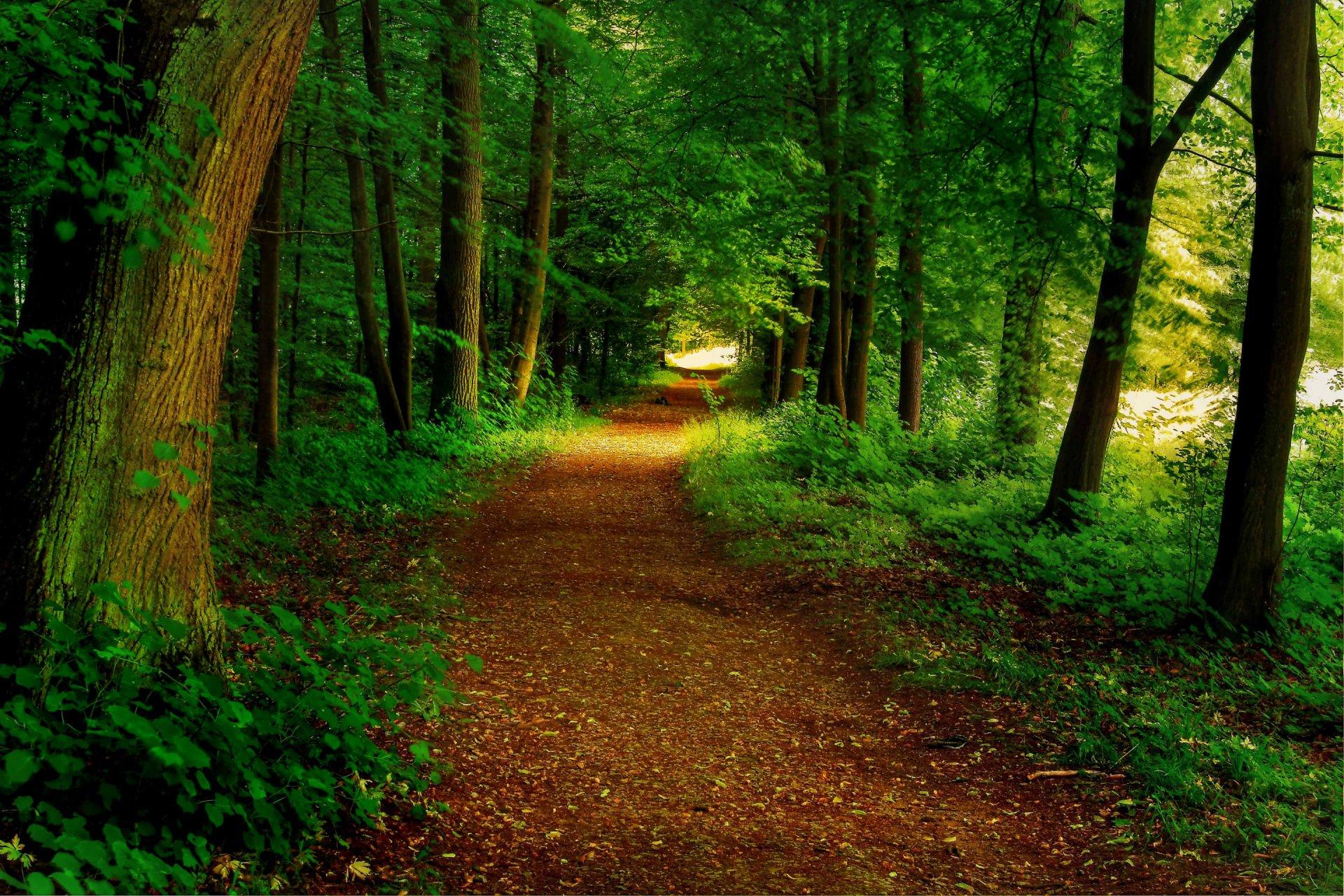 меняющиеся картинки лес строительство