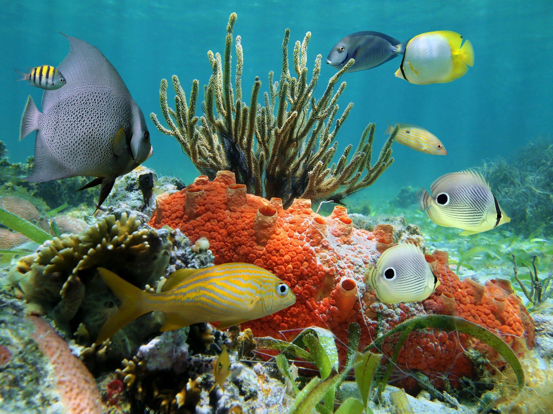 Надписью идиот, красивые картинки подводный мир