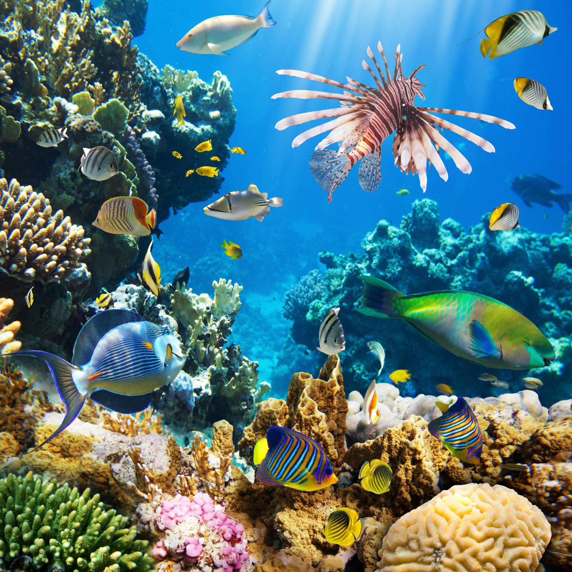 вылет картинки дна океана с рыбками карстовое