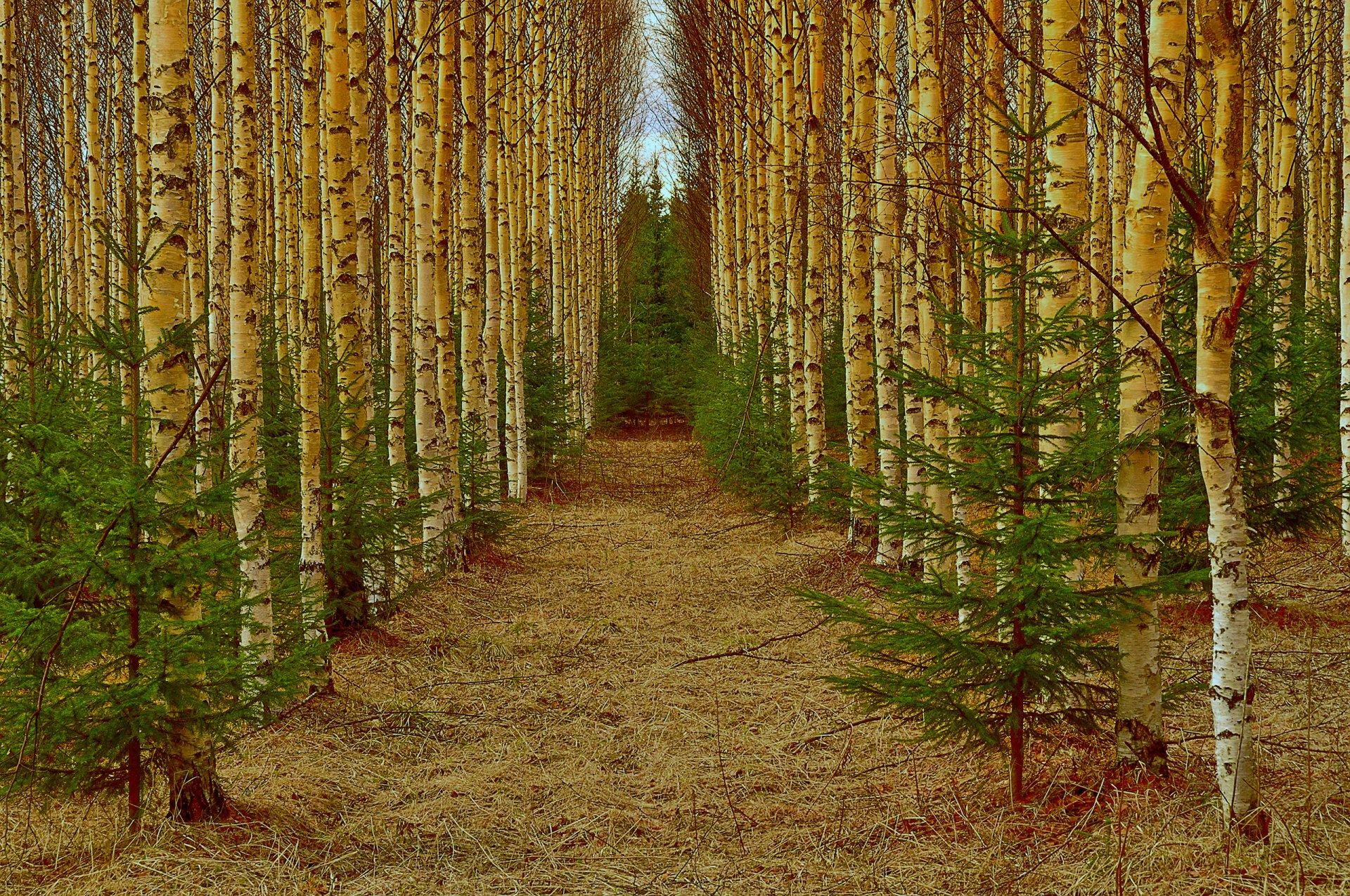 подключить фотообои золото лесов машины стремятся добраться