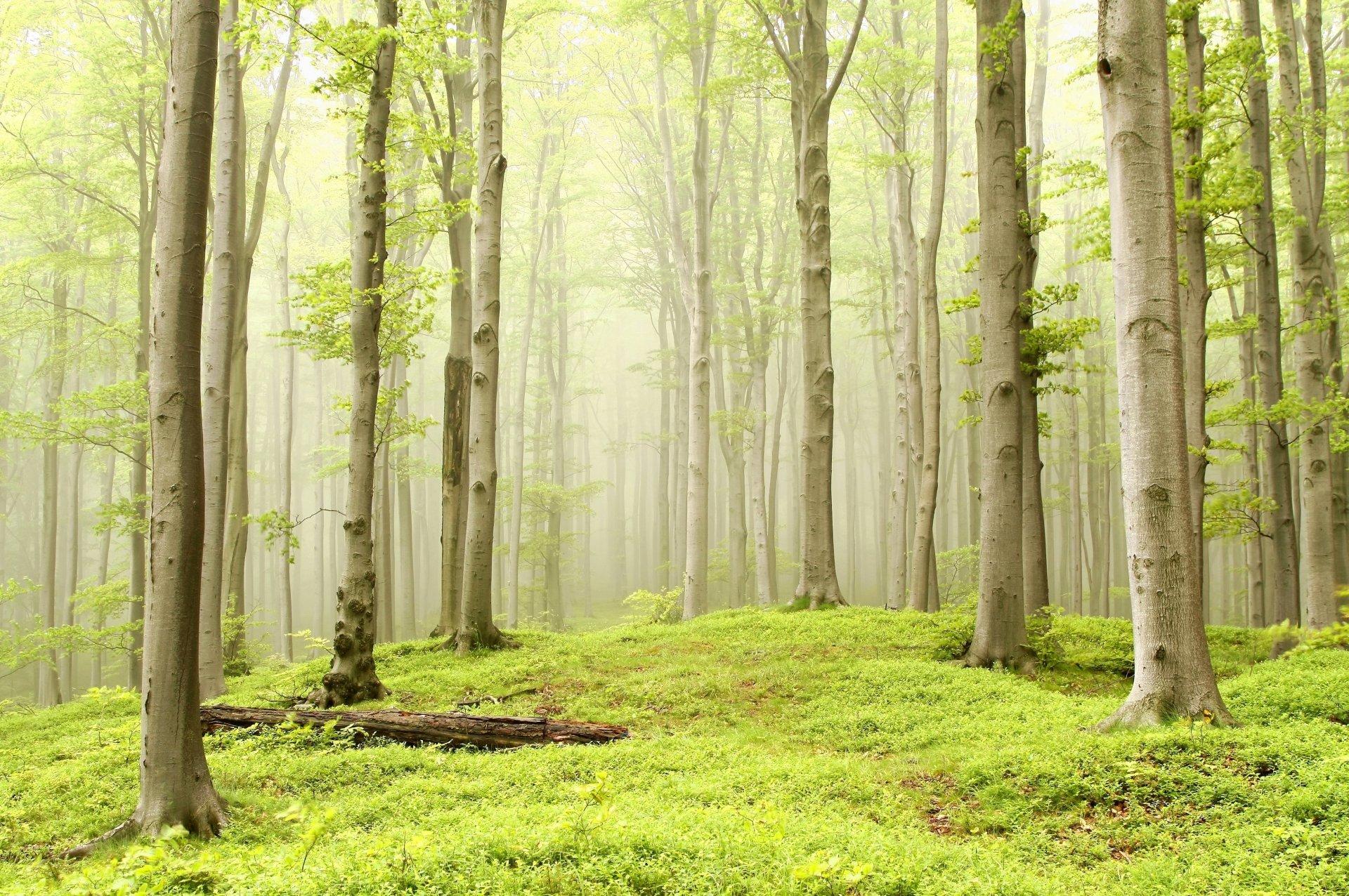 Фон леса для поздравления, днем