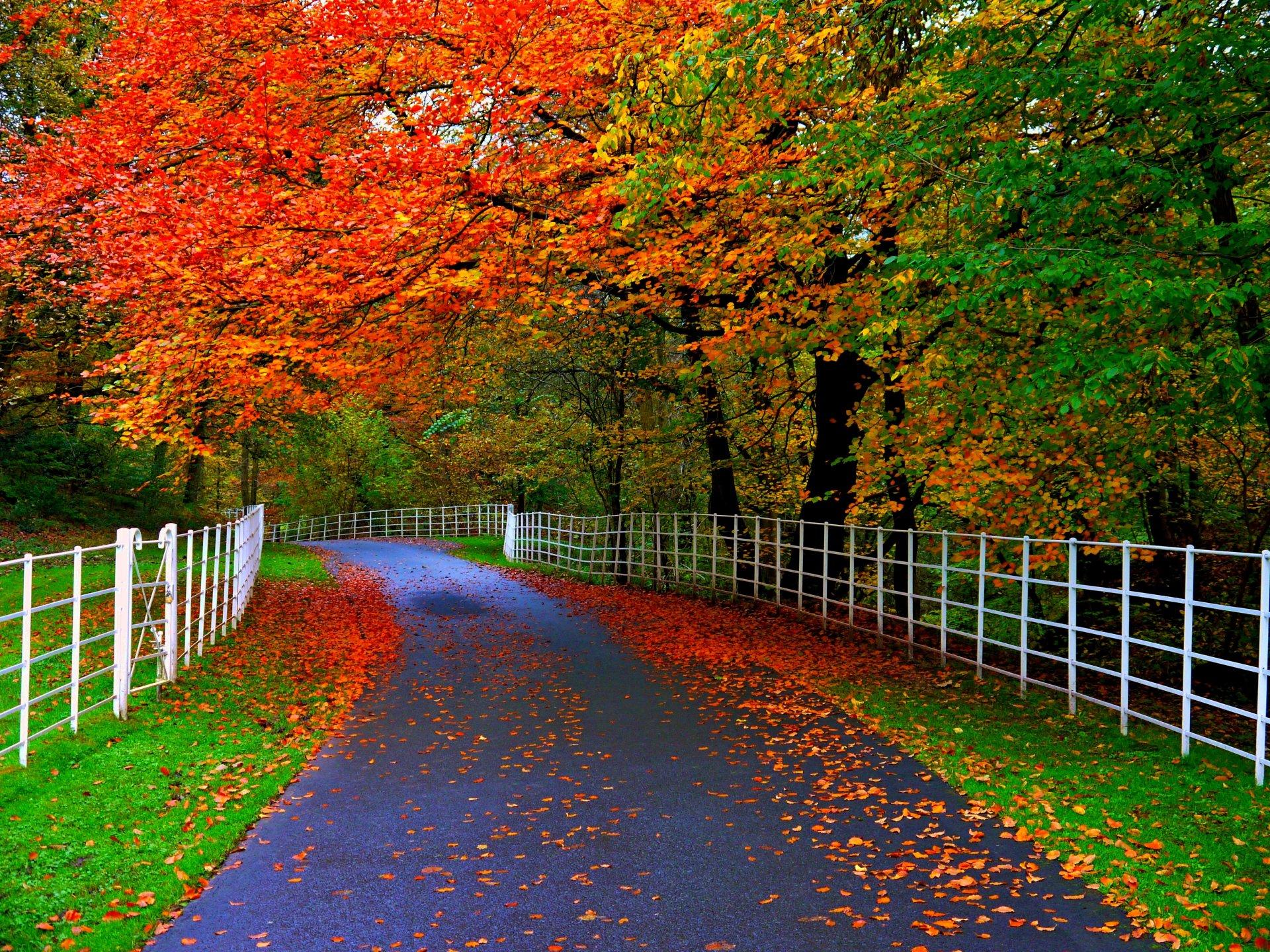 квартиру картинка осень на виндовс фон этом