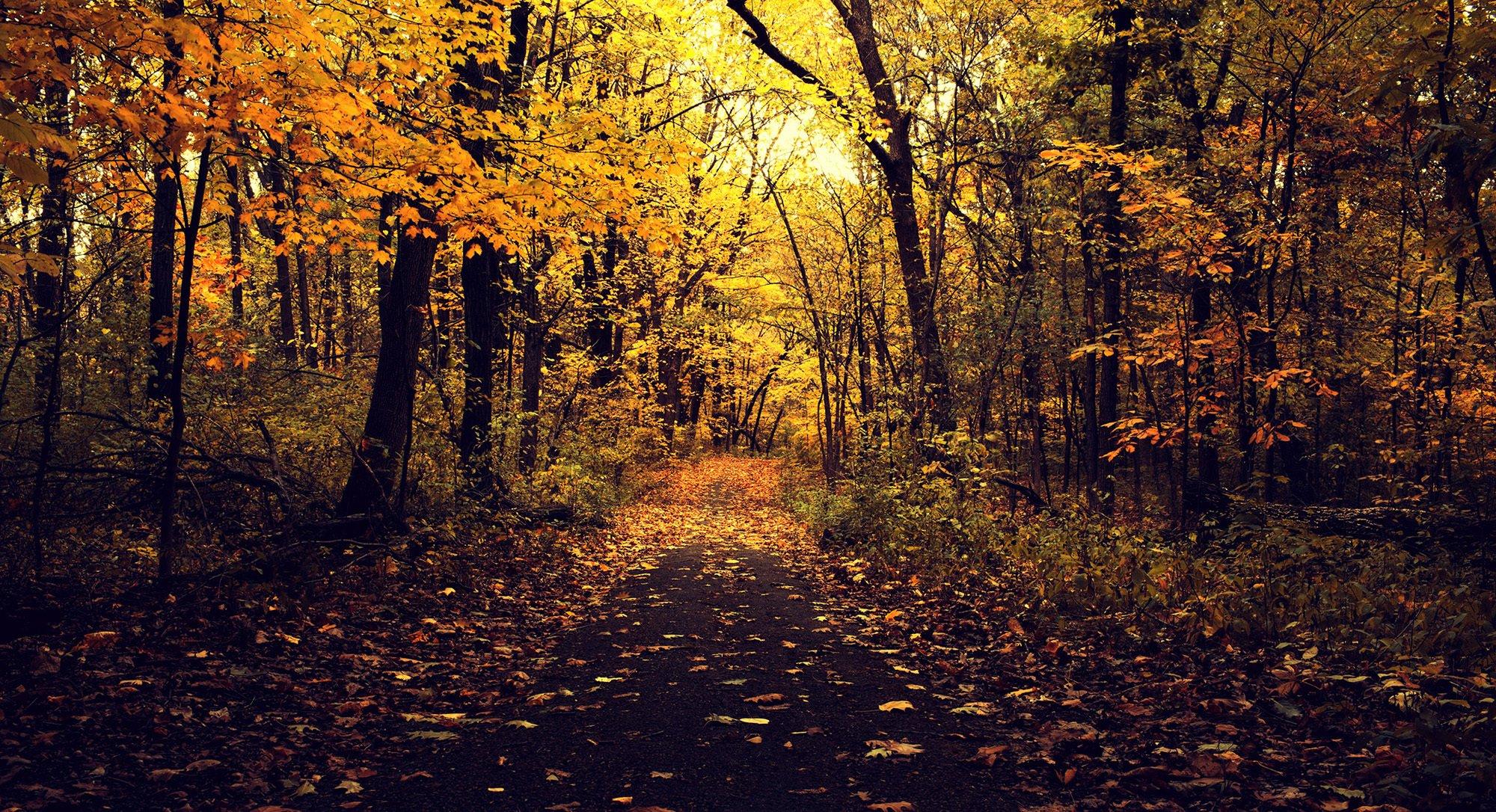 Обои желтые, асфальт, осень. Природа foto 8