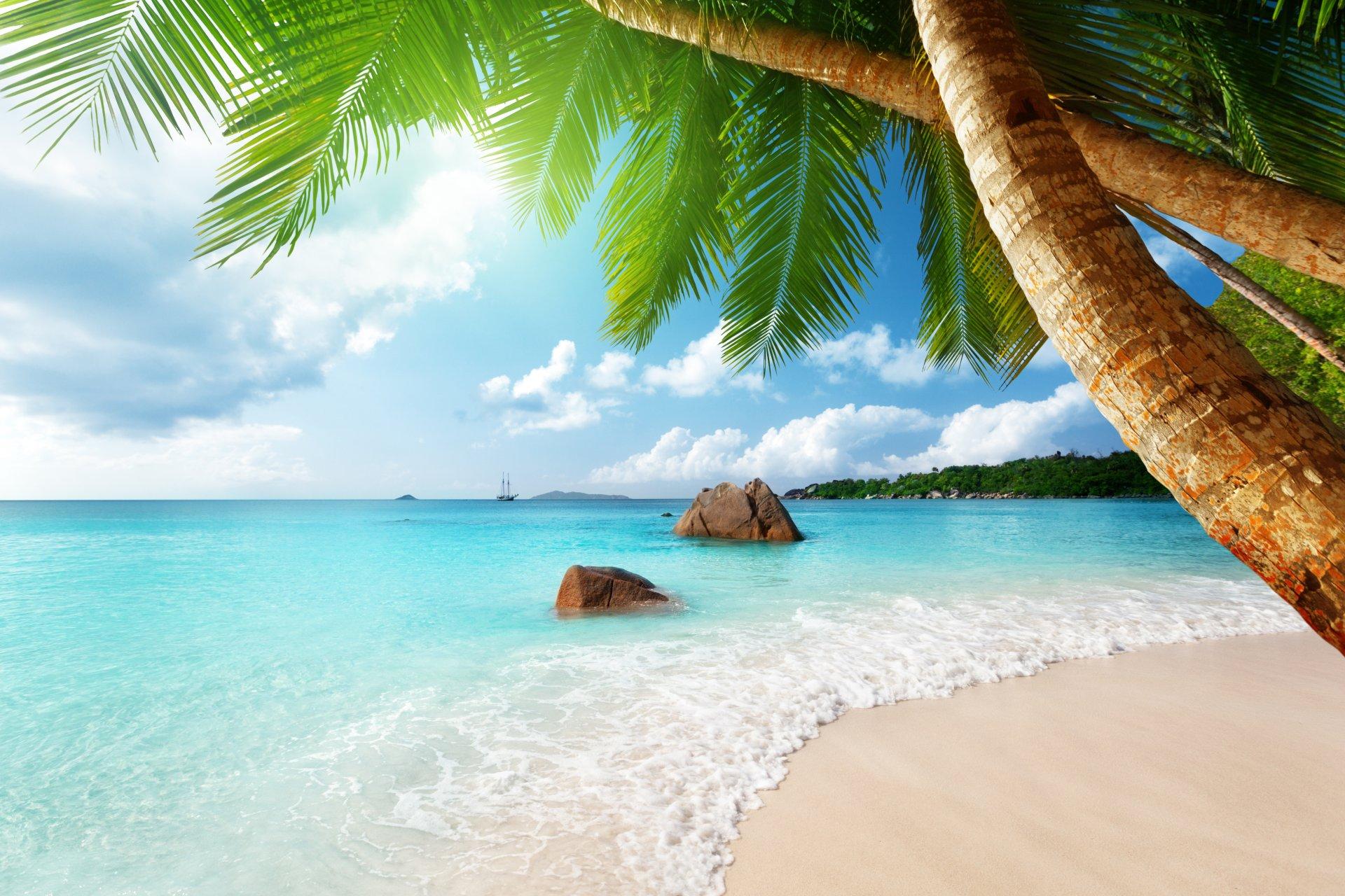 пальмы море солнце фото