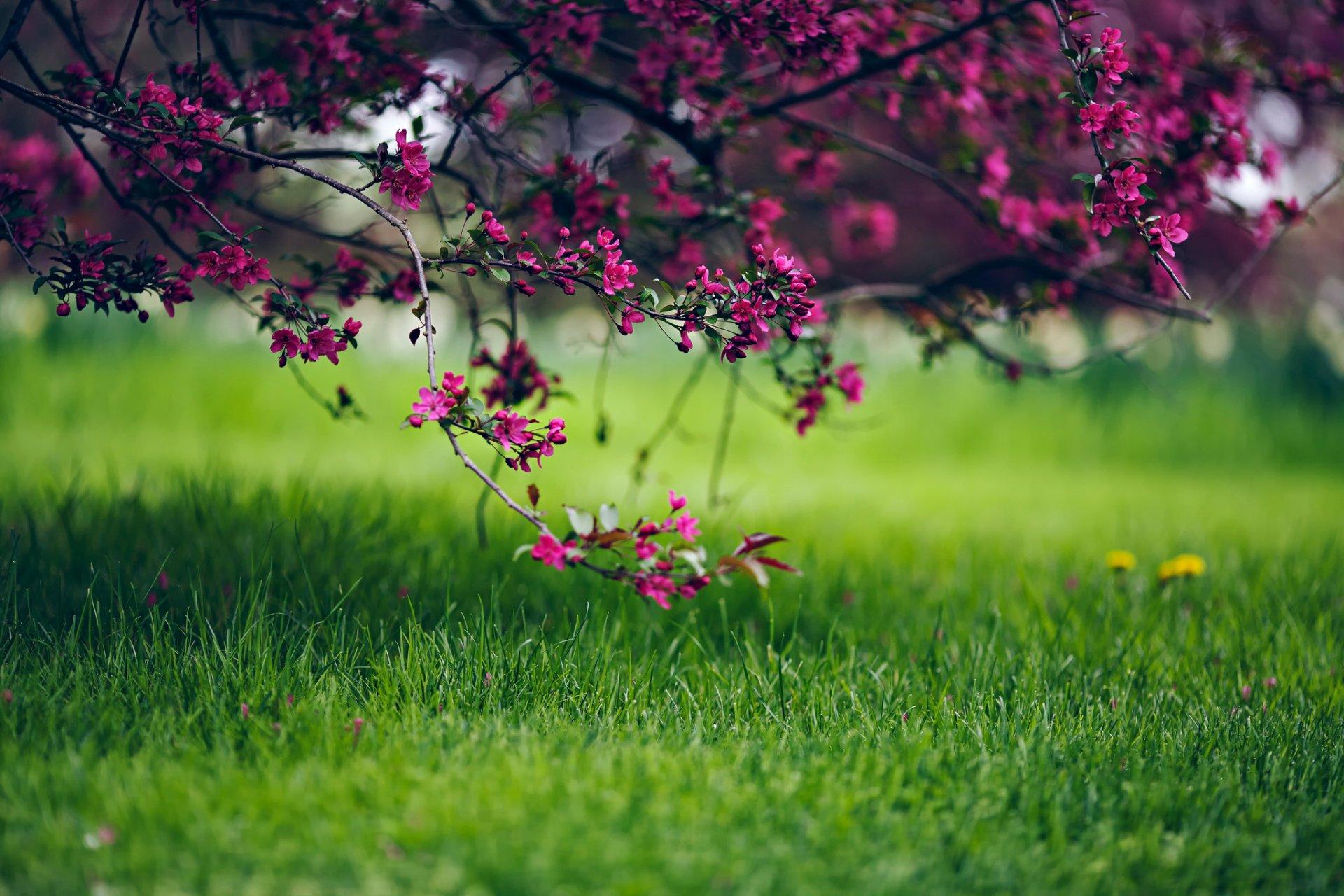 картинки для ноутбука весна