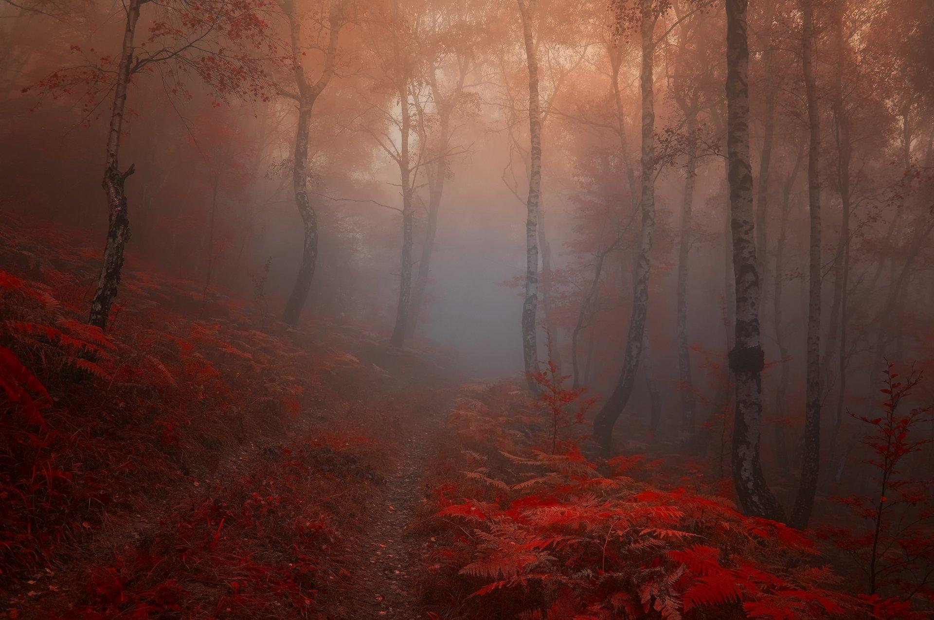 обои на рабочий стол лес в тумане мрачноватый гриппа типов