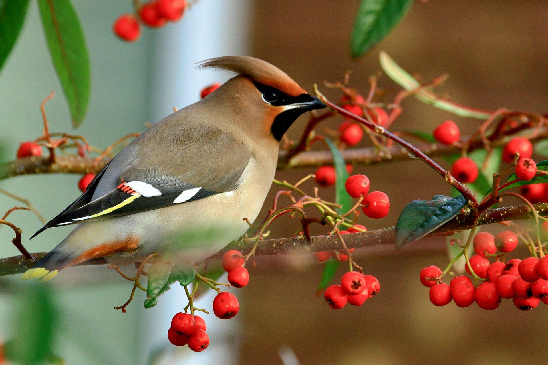про птиц осенью