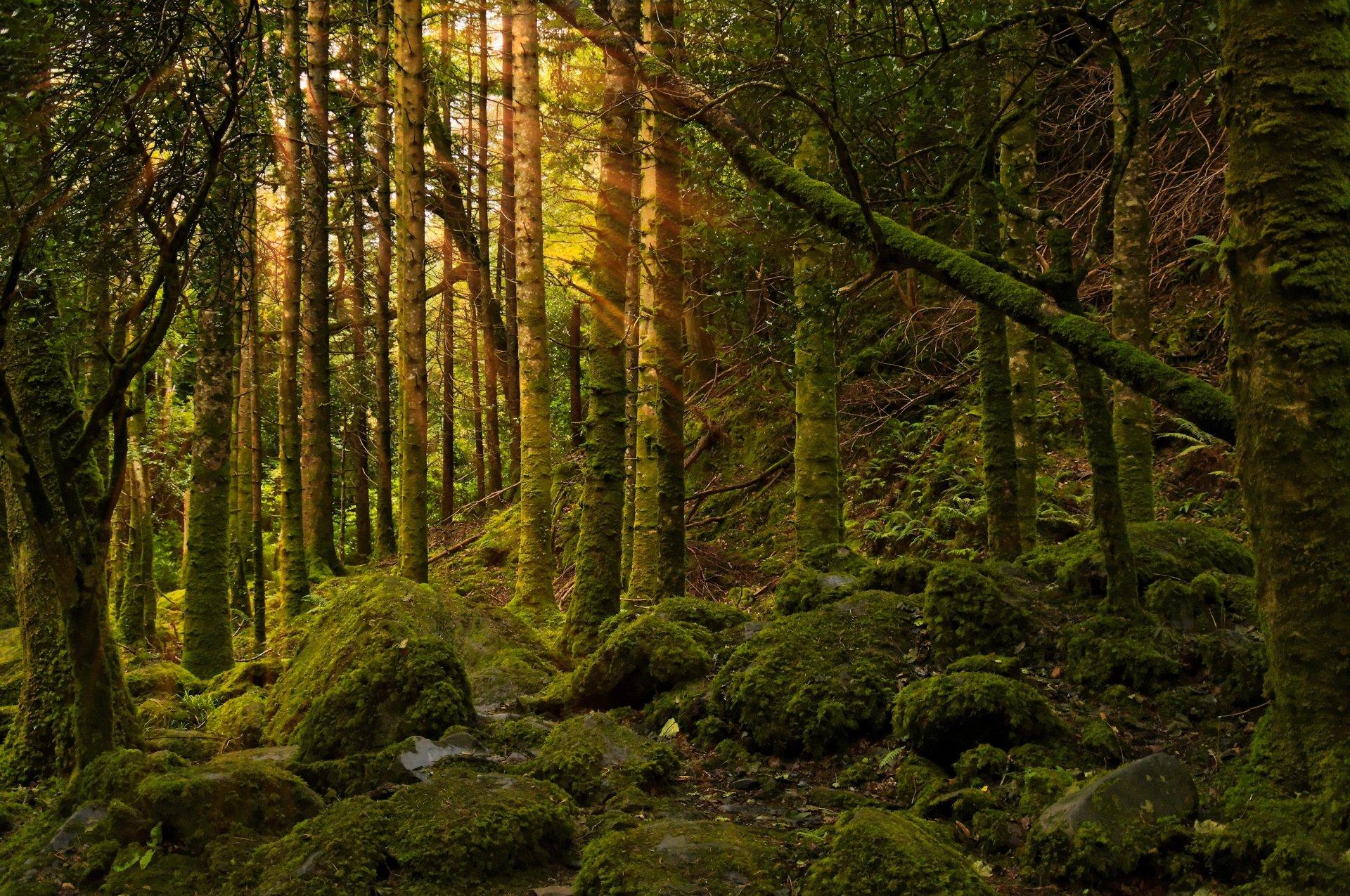 путин лучшие фотографии леса более, что летящего