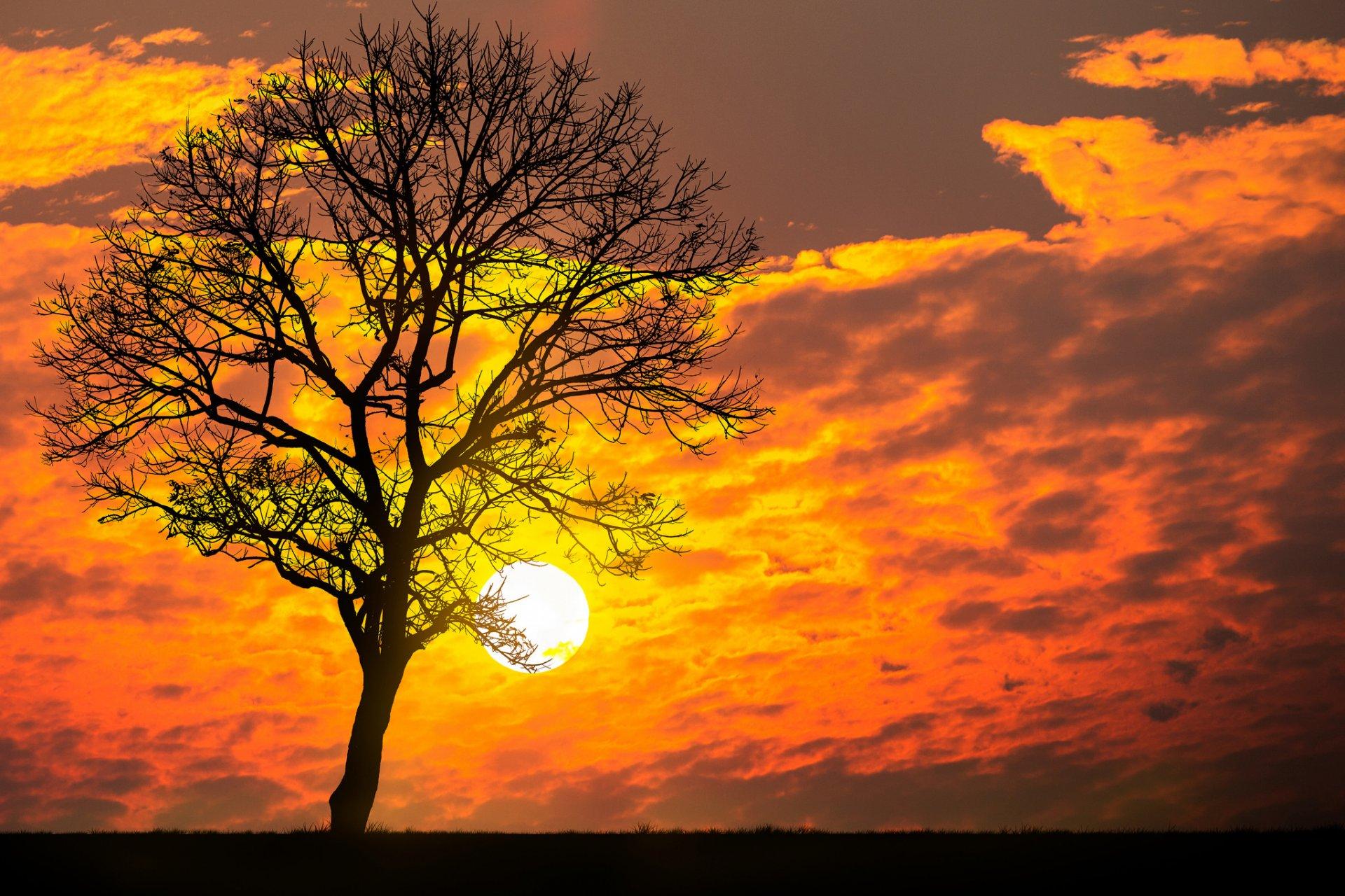 Деревья солнце картинки
