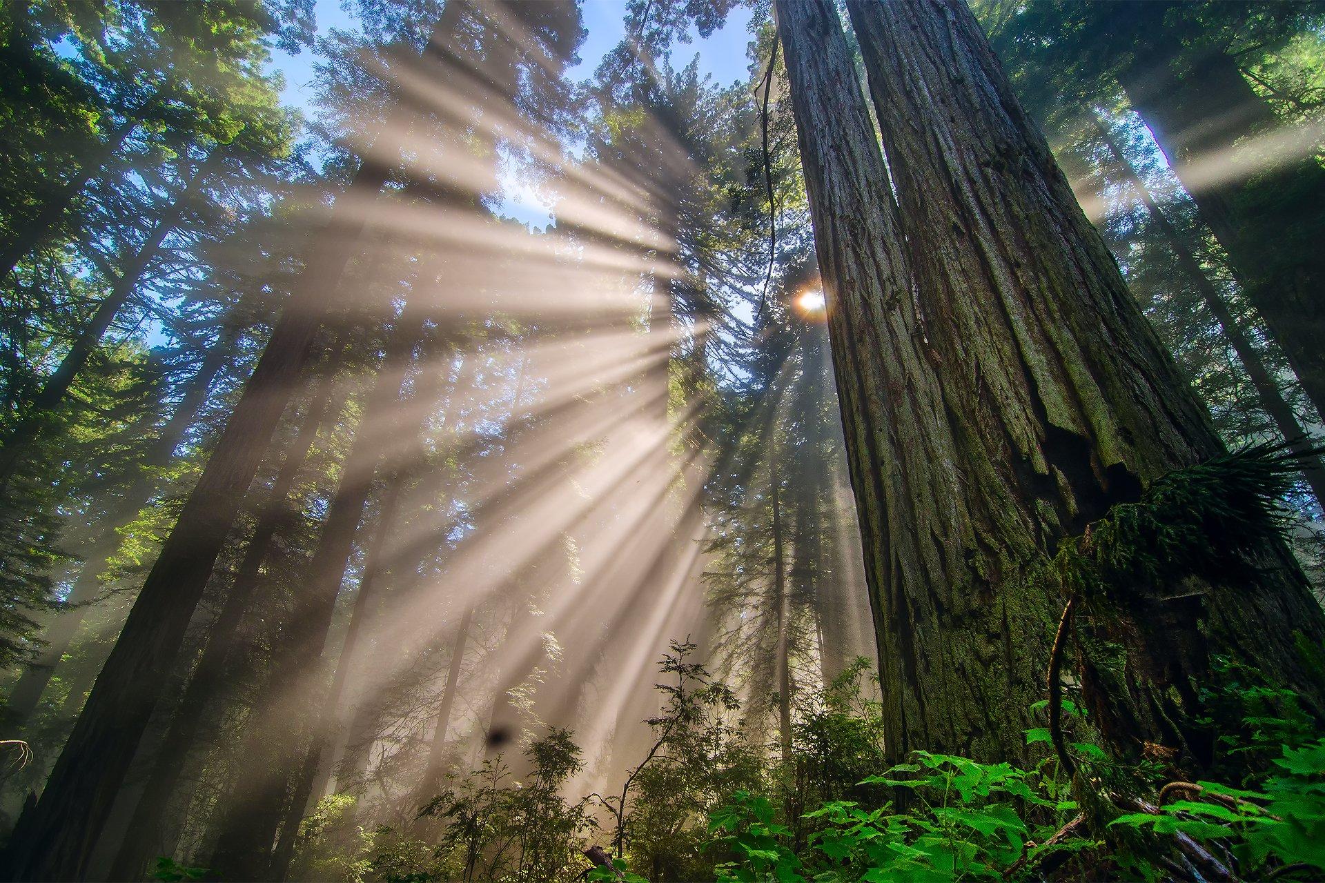 того, как фотографировать лучи света бригада вырубке деревьев