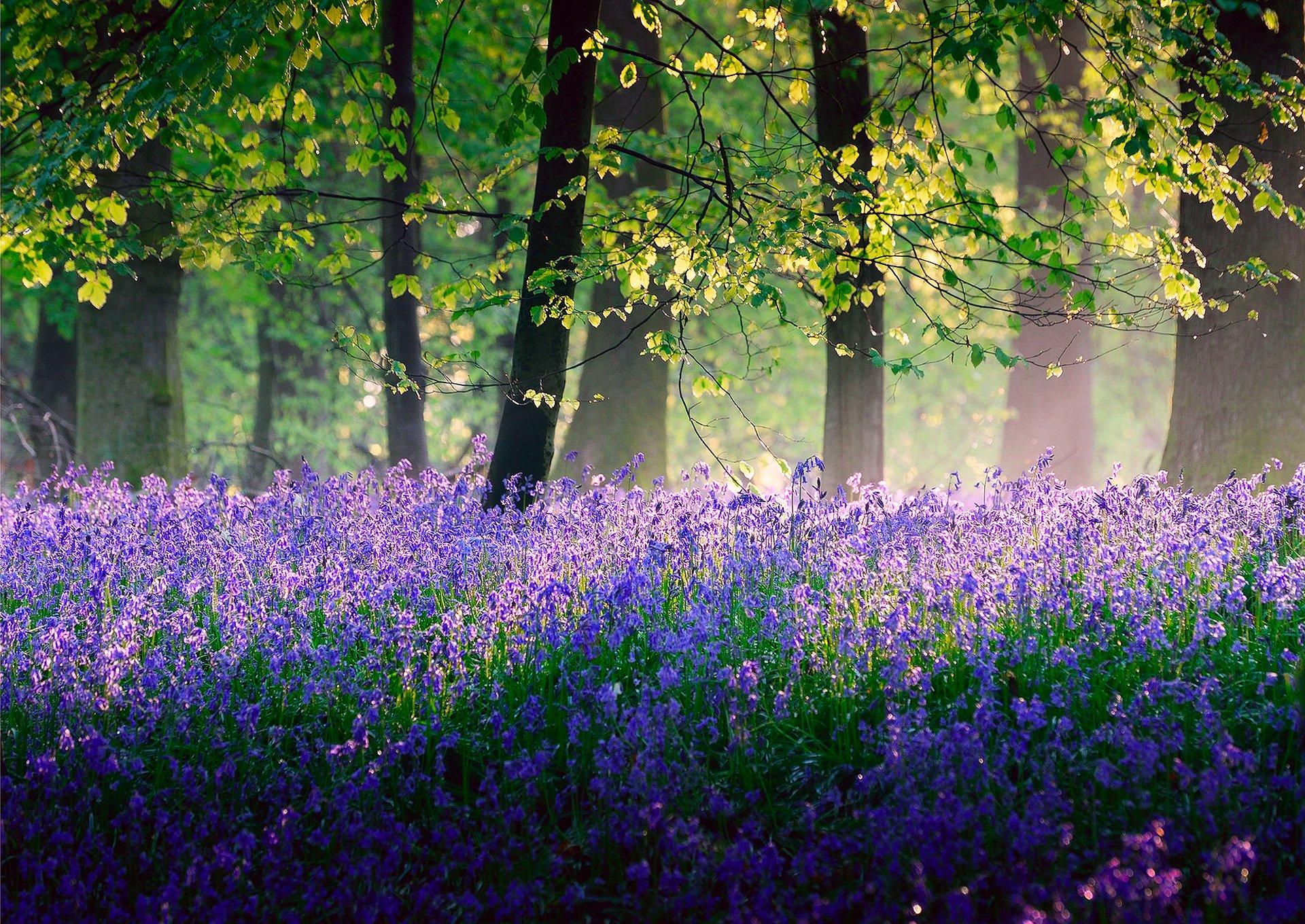 уверены качестве обои англия лес с цветами фото удочерил девочку