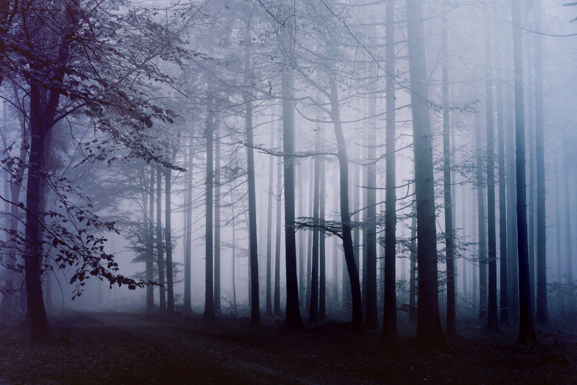 туманный лес рисунок