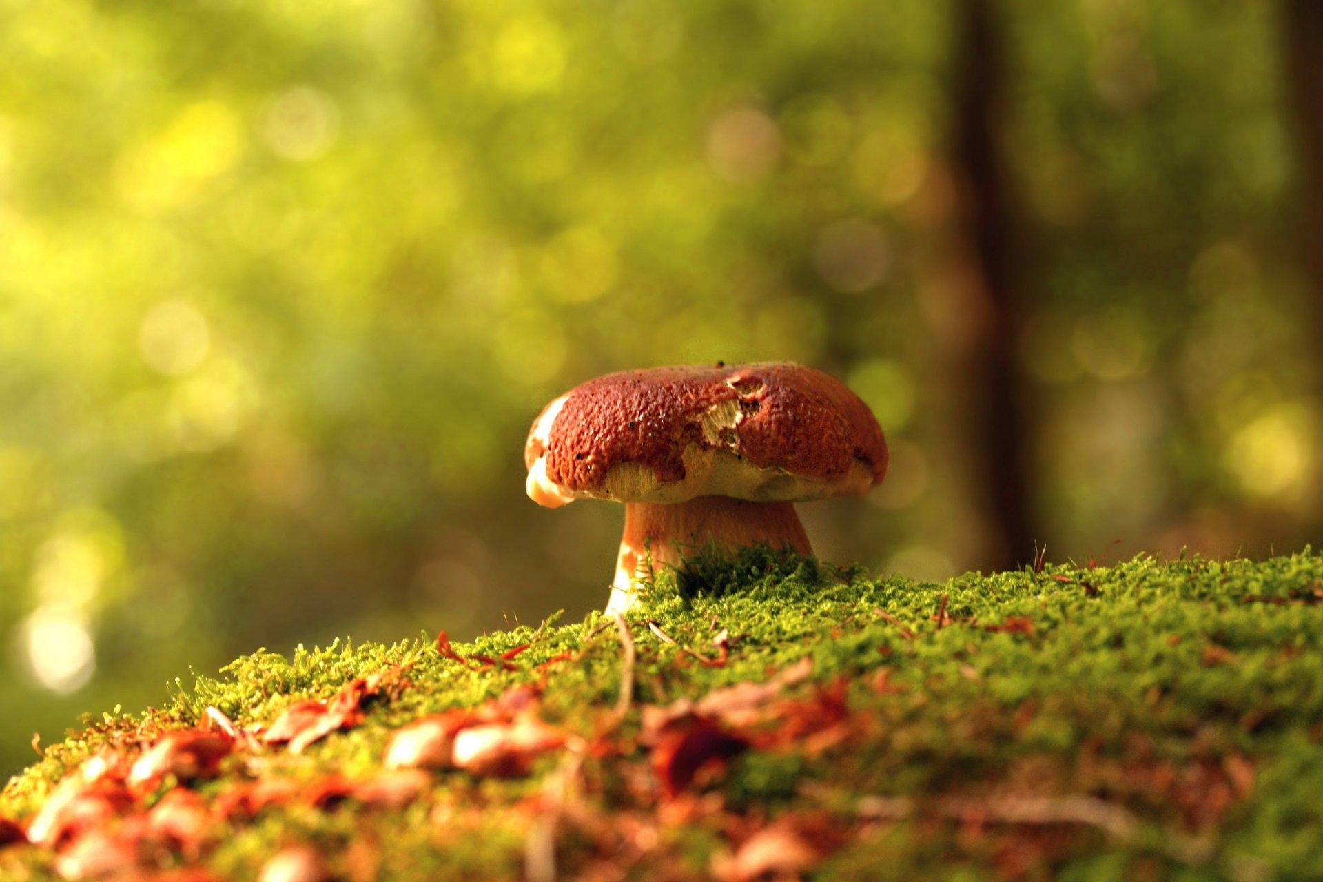 картинки на рабочий стол лес осень грибы кажется