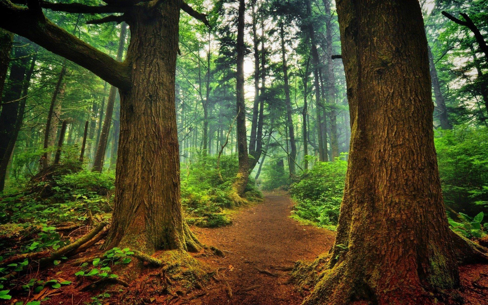 фотографии леса для печати хочется