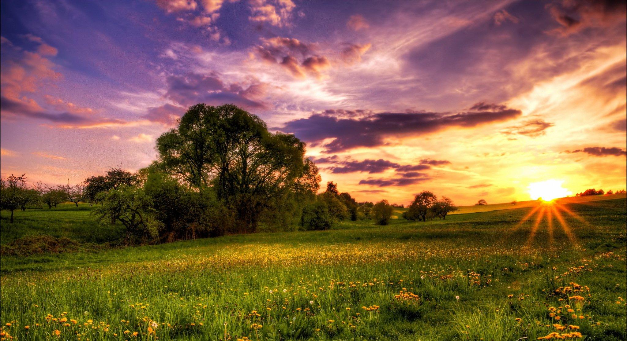 Восход на фоне одуванчиков бесплатно