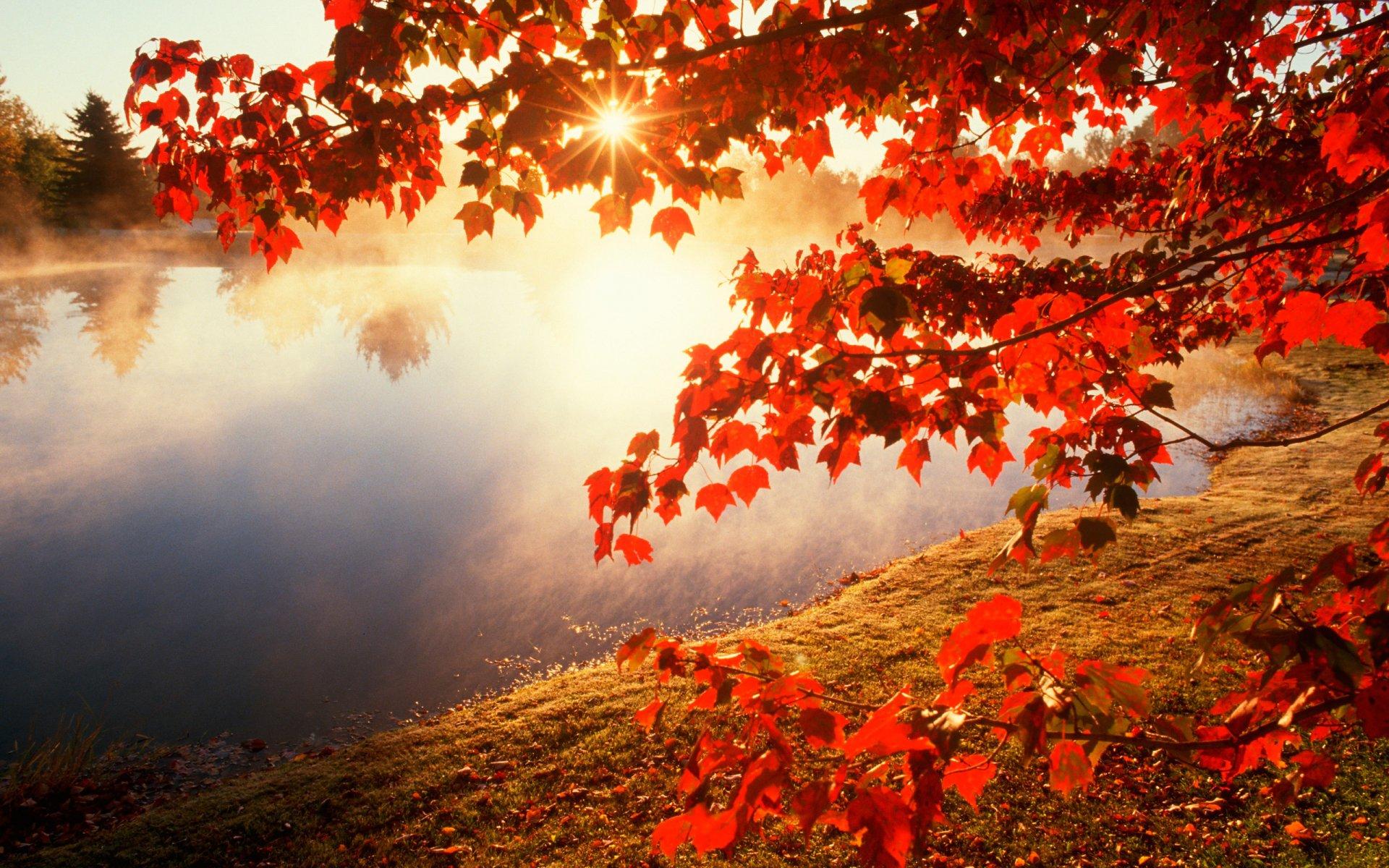 осень озеро деревья листья загрузить