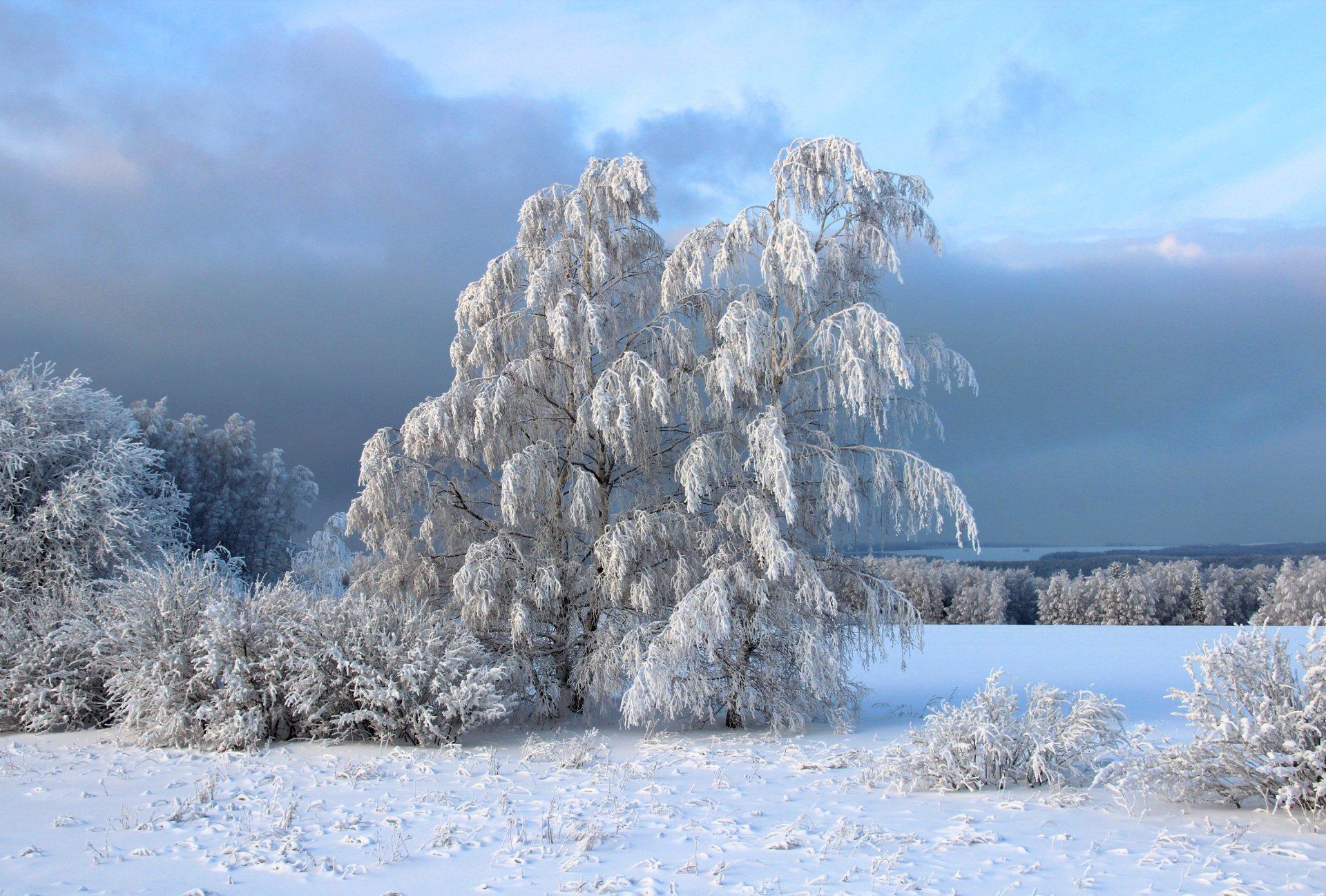 Картинки лучшие зима