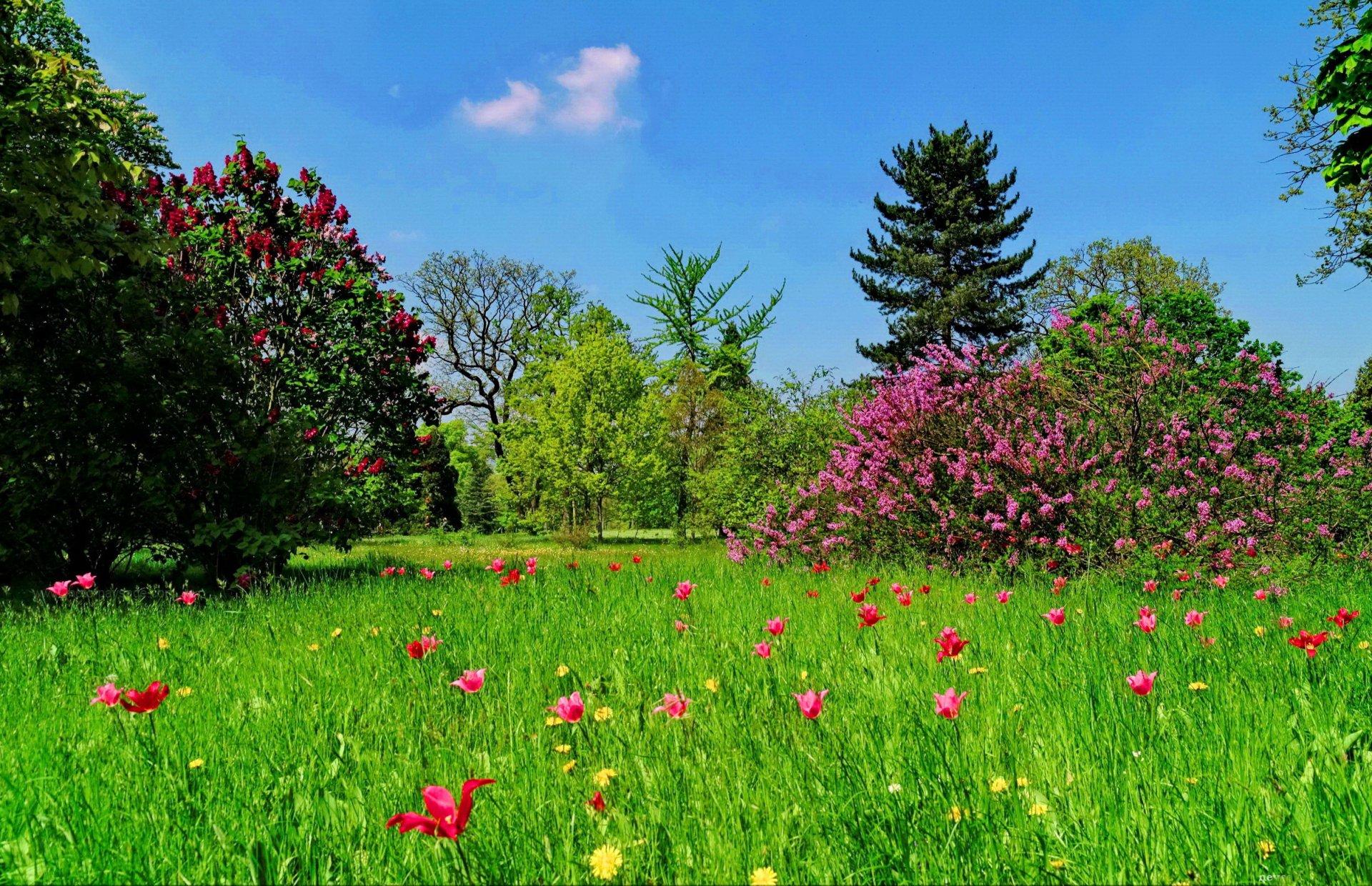 Красота растений летом 275