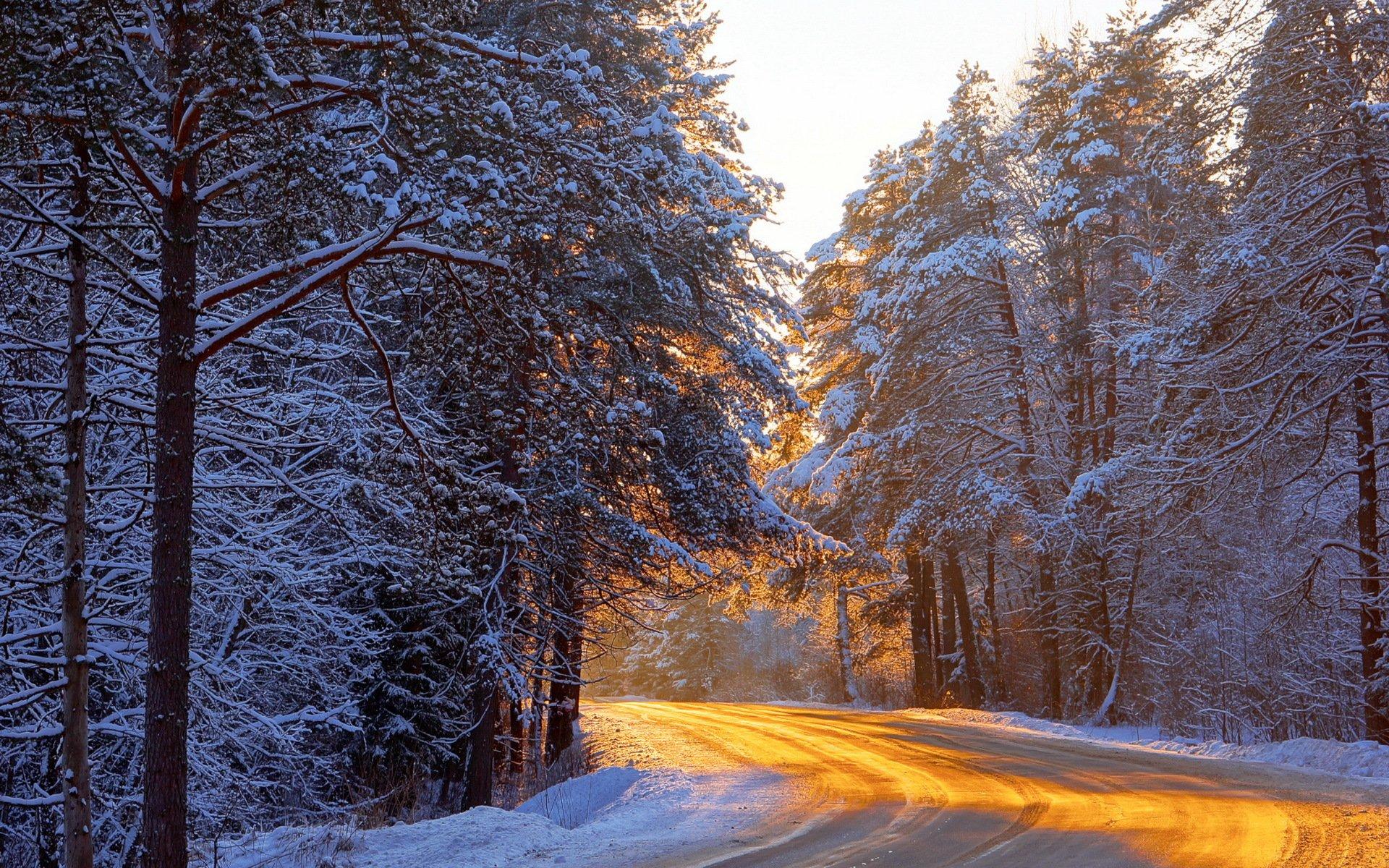 солнечная зима в лесу загрузить