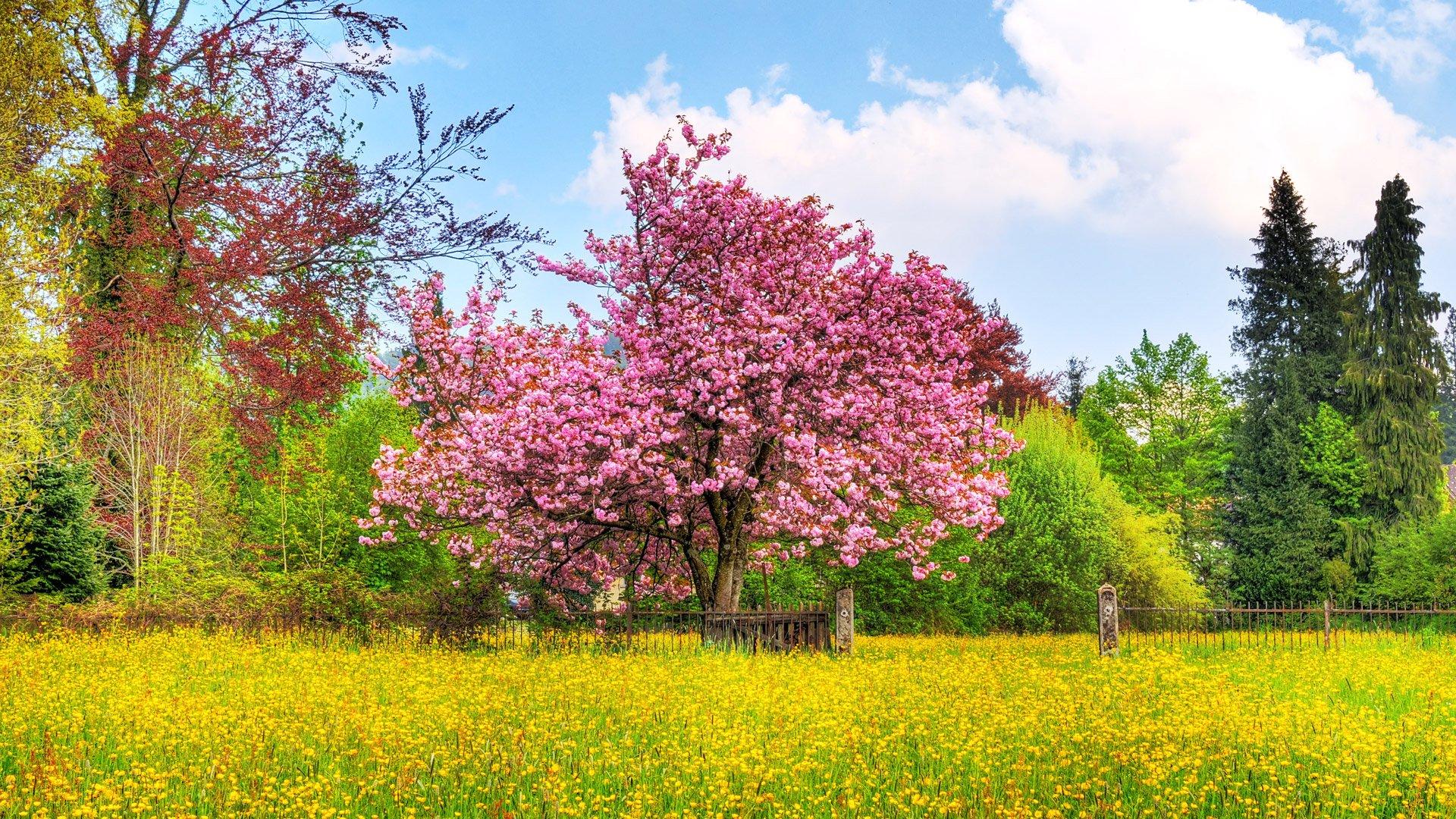 Картинки весенние пейзажи на телефон, февраля