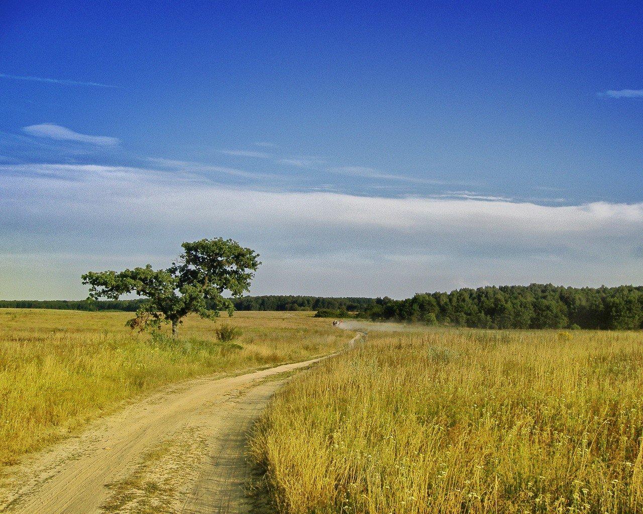 дорога лесостепь солнце  № 786352 загрузить