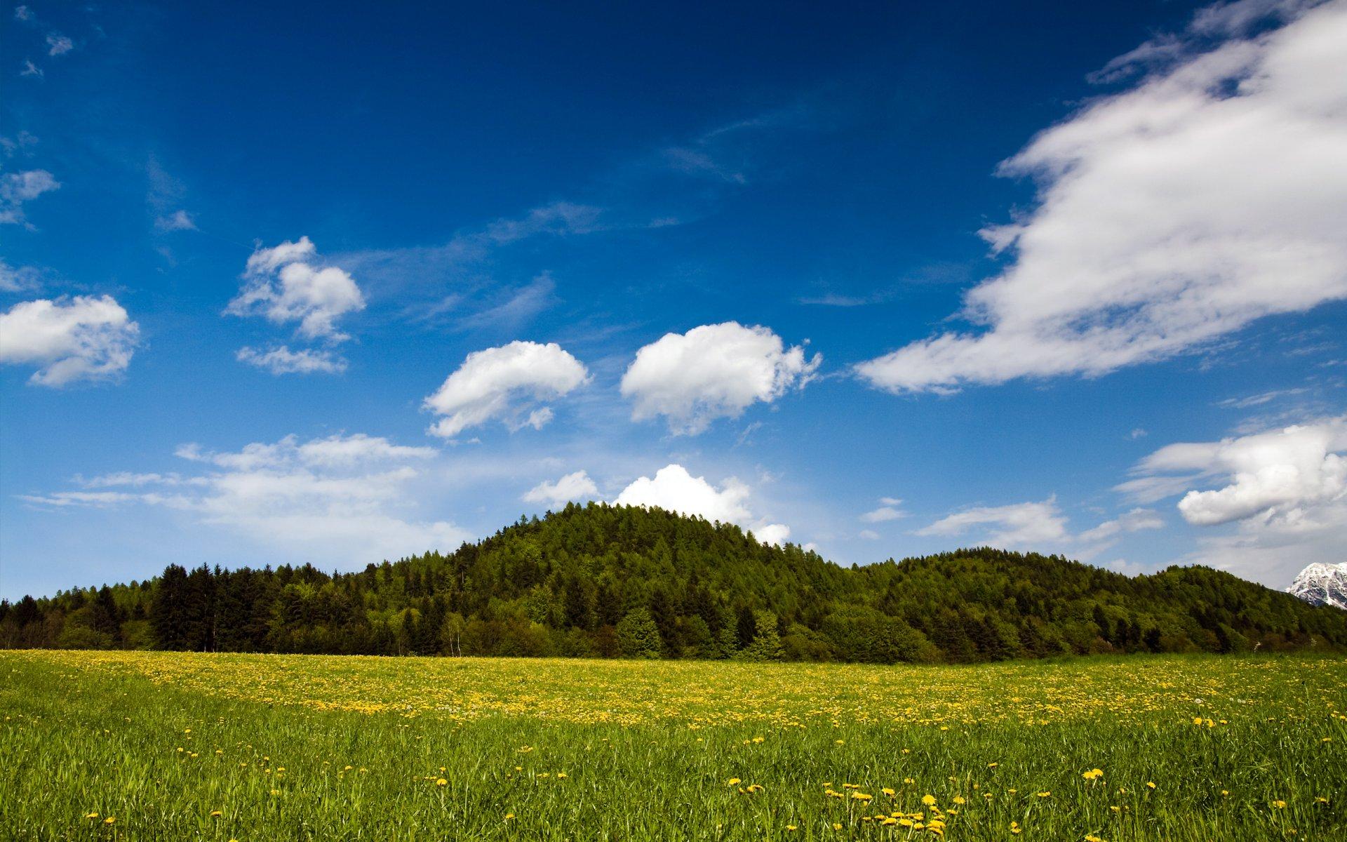 зелень лето поле лес greens summer field forest скачать