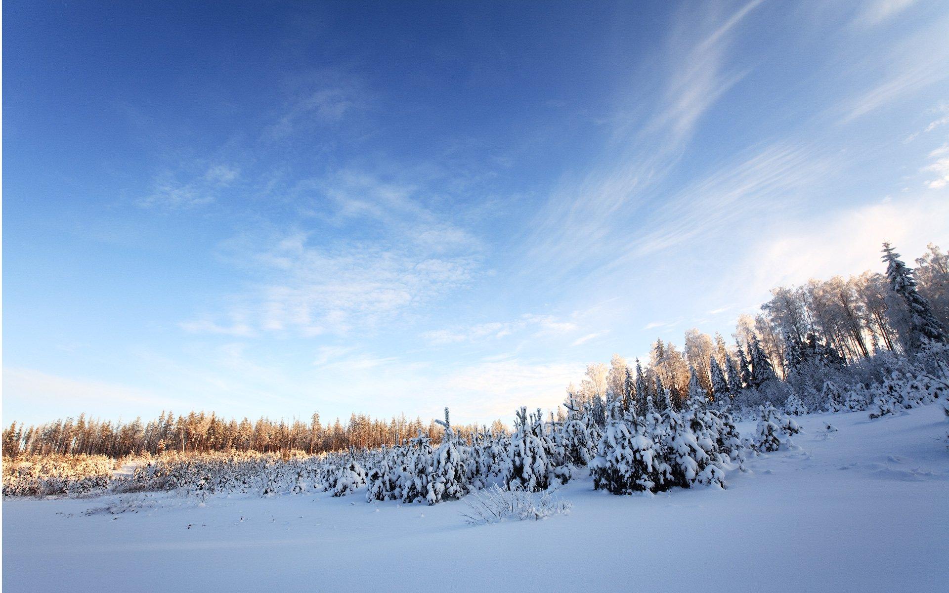 милый зимнее небо фото фетра хэллоуин
