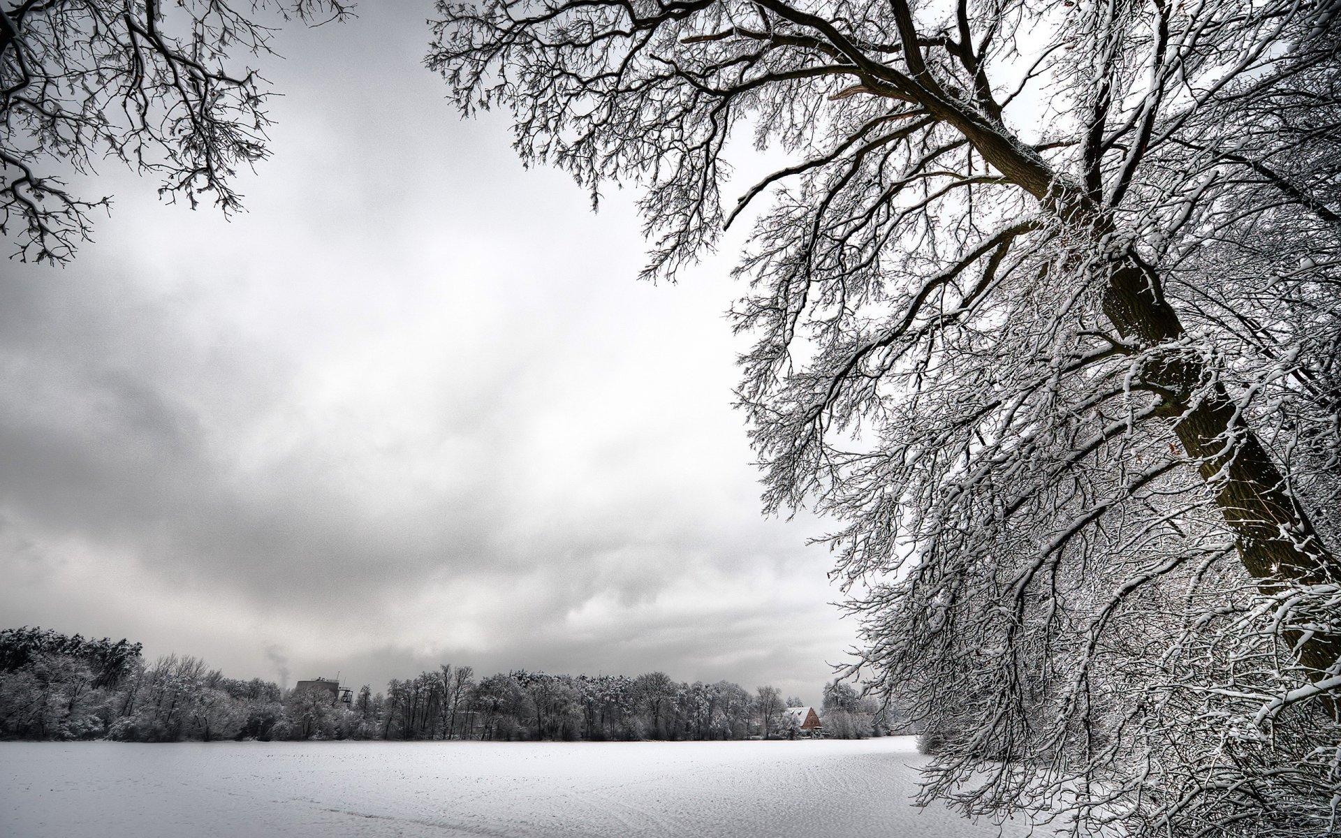 выборе зимние деревья фото черно белые сегодняшней