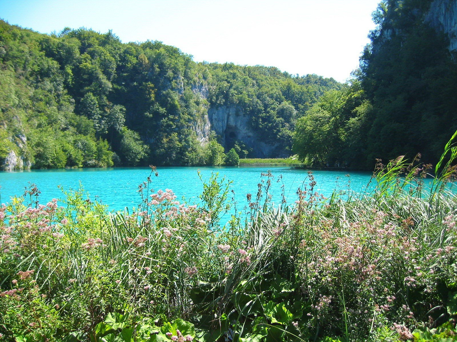 Берег озера в траве  № 2482638  скачать