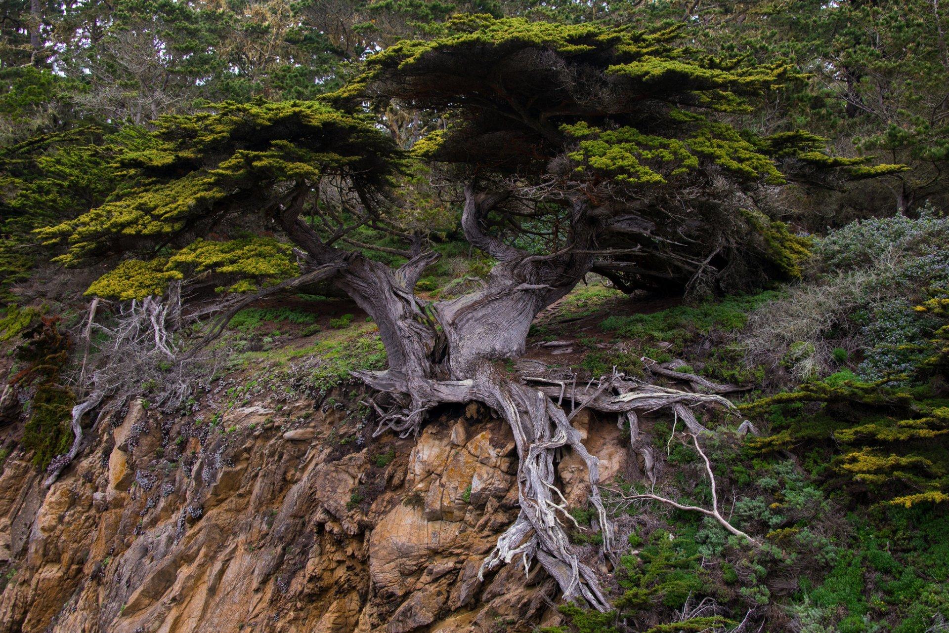 отличие прицепов, дерево в скале картинки пальто универсальный элемент