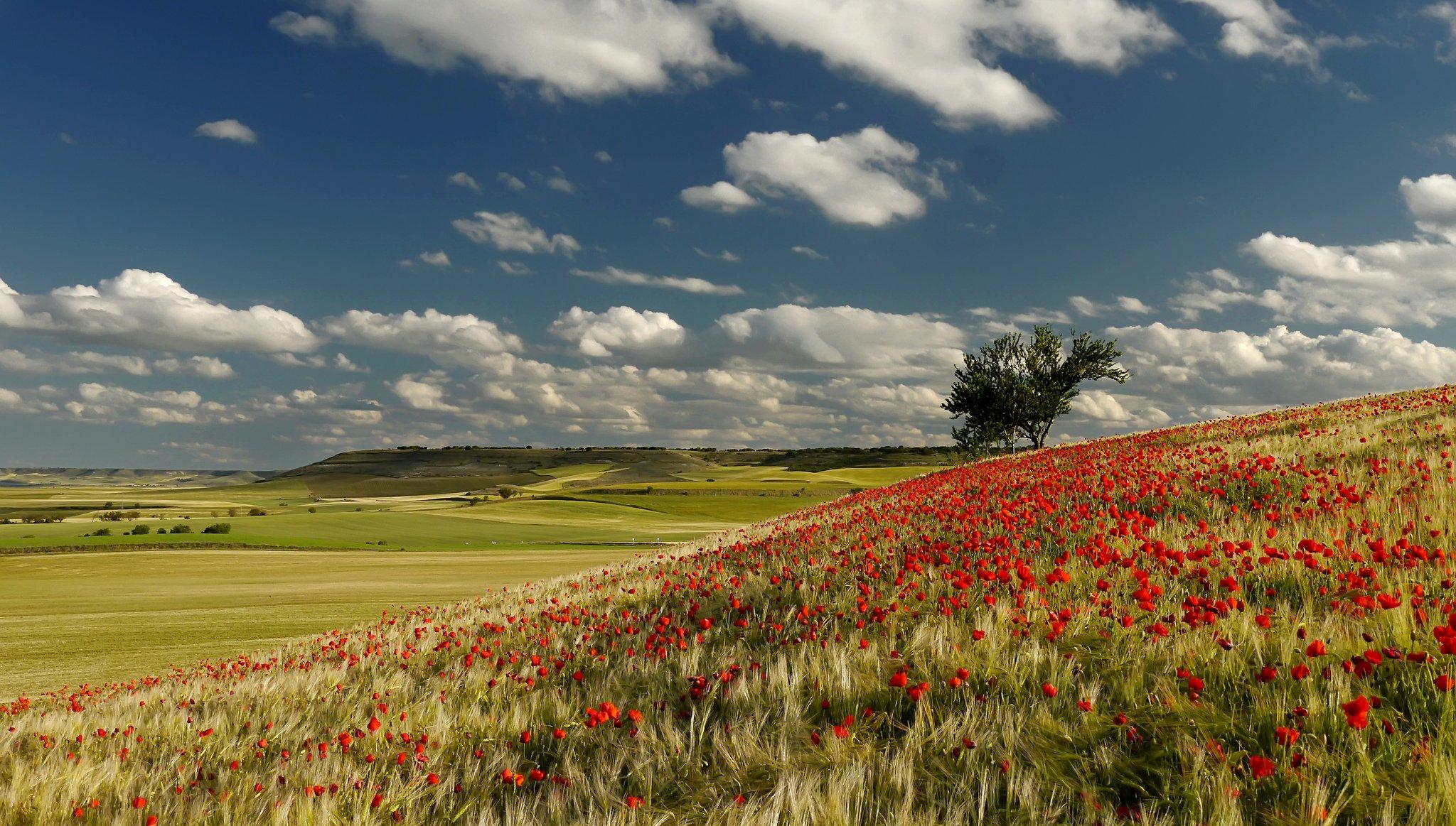 природа поле цветы облака деревья бесплатно