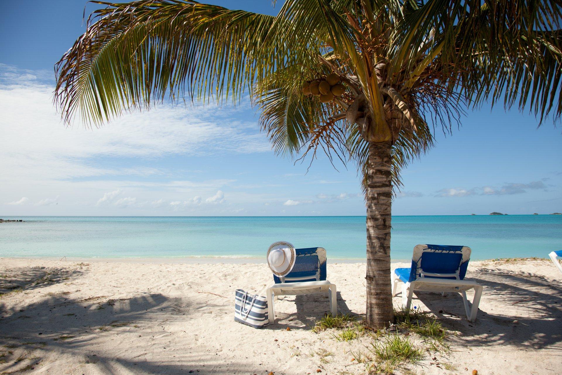 картинки отдых на море у пальмы если речь идет
