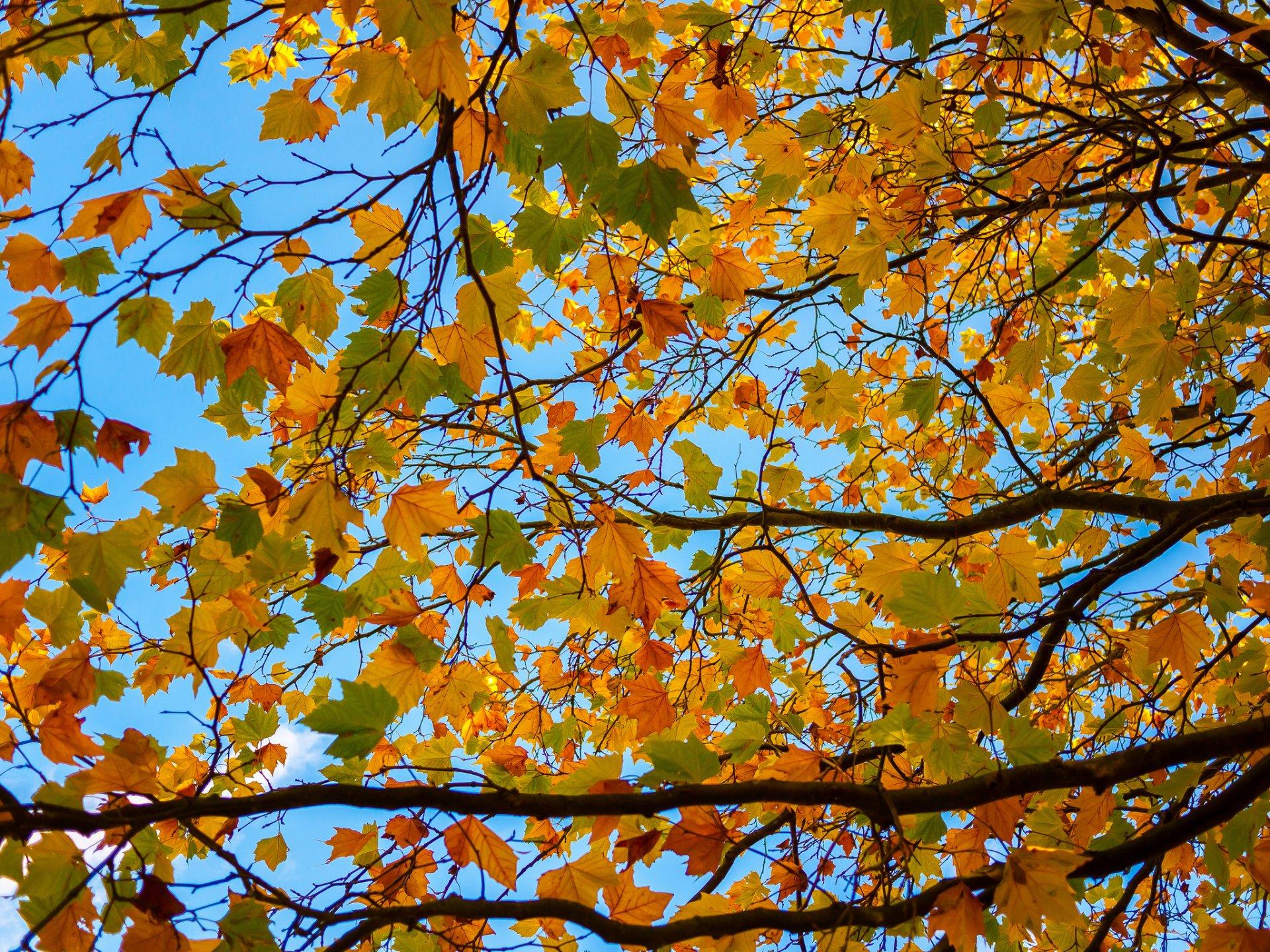 Картинки с пословицами про осень несет