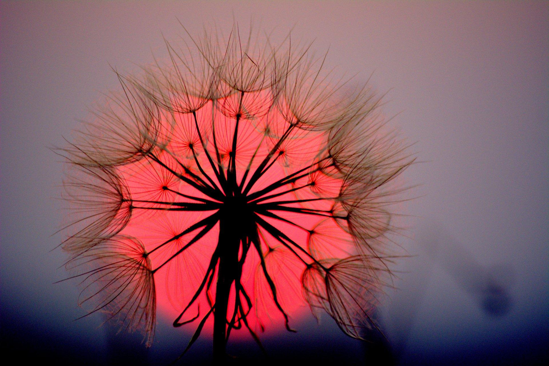 цветок закат макро загрузить