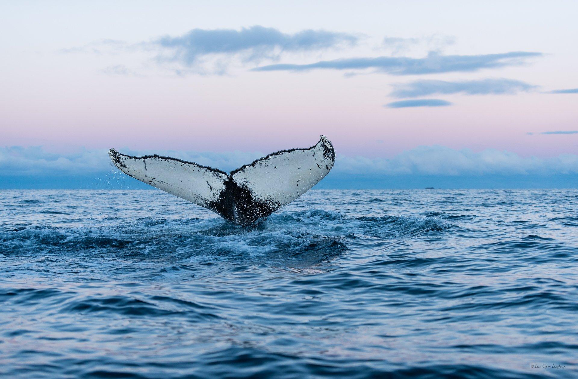 Картинки китов в море