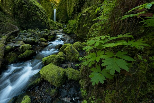 Mossy Grotto Falls Ruckel Creek Columbia River Gorge Oregon водопад ручей камни мох листья