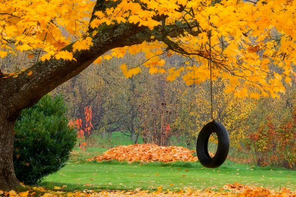 nature forest swing park trees leaves colorful autumn fall colors walk листья осень природа деревья лес парк качели