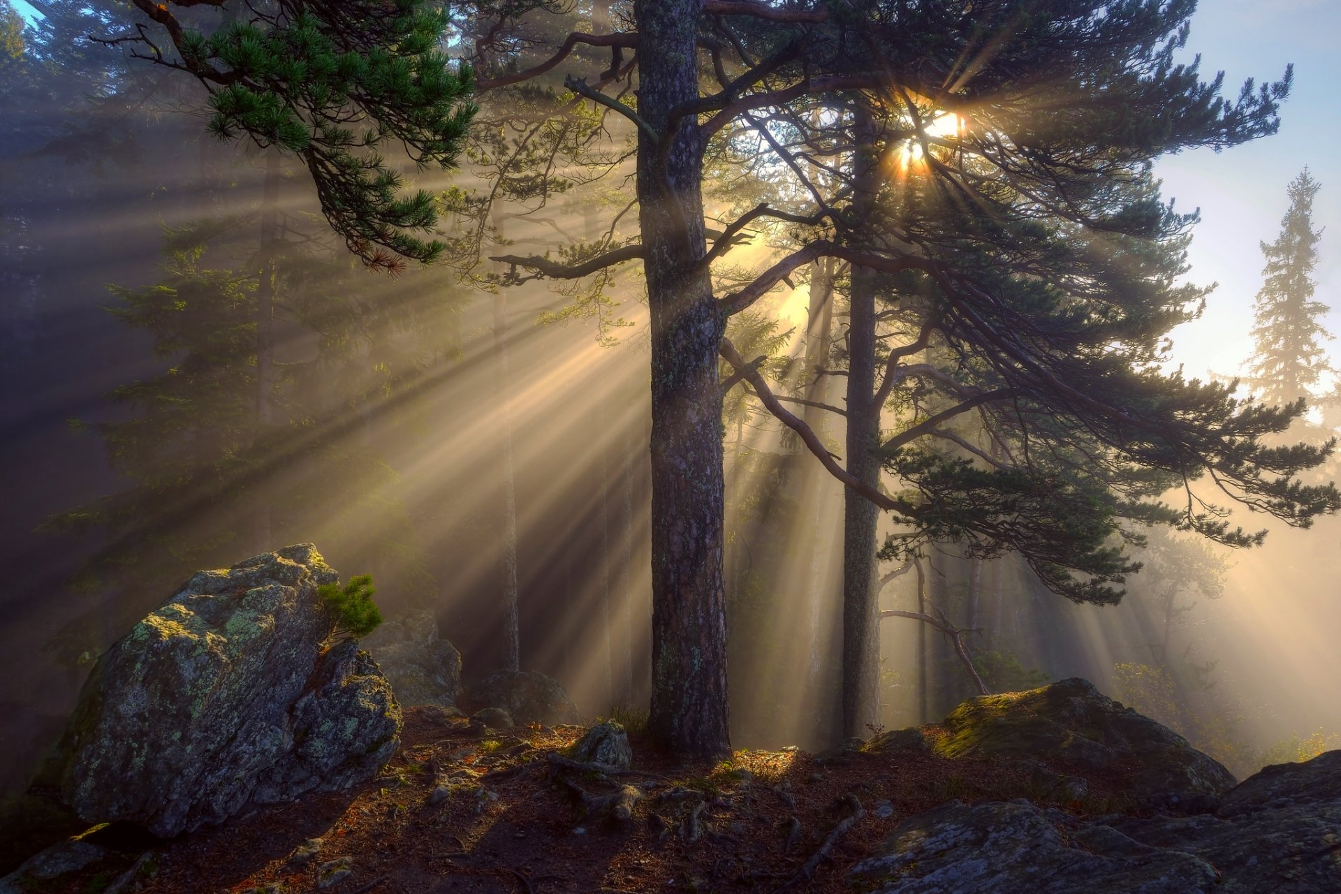 лучи солнца в лесу картинки и фото правила придумали