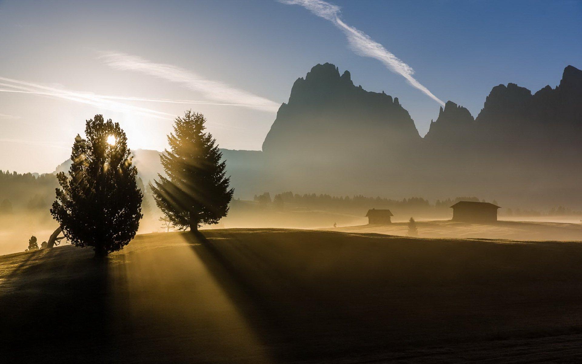 Обои елка, туман, утро. Природа foto 11