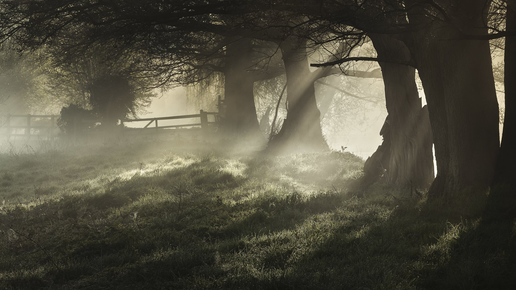природа туман свет подборки