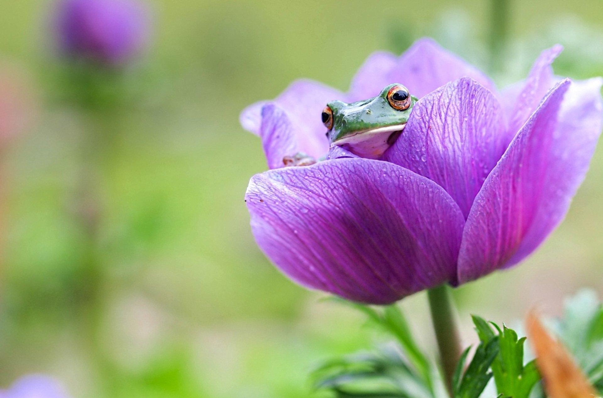 природа цветы животное лягушка  № 3068557 бесплатно