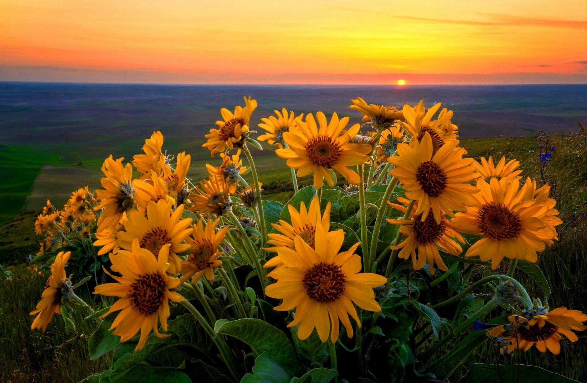Доброе утро лето рассвет цветы солнце красивые картинки
