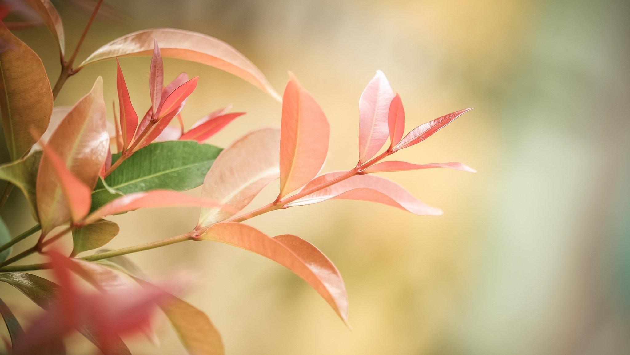 ветка с листьями  № 3792360  скачать