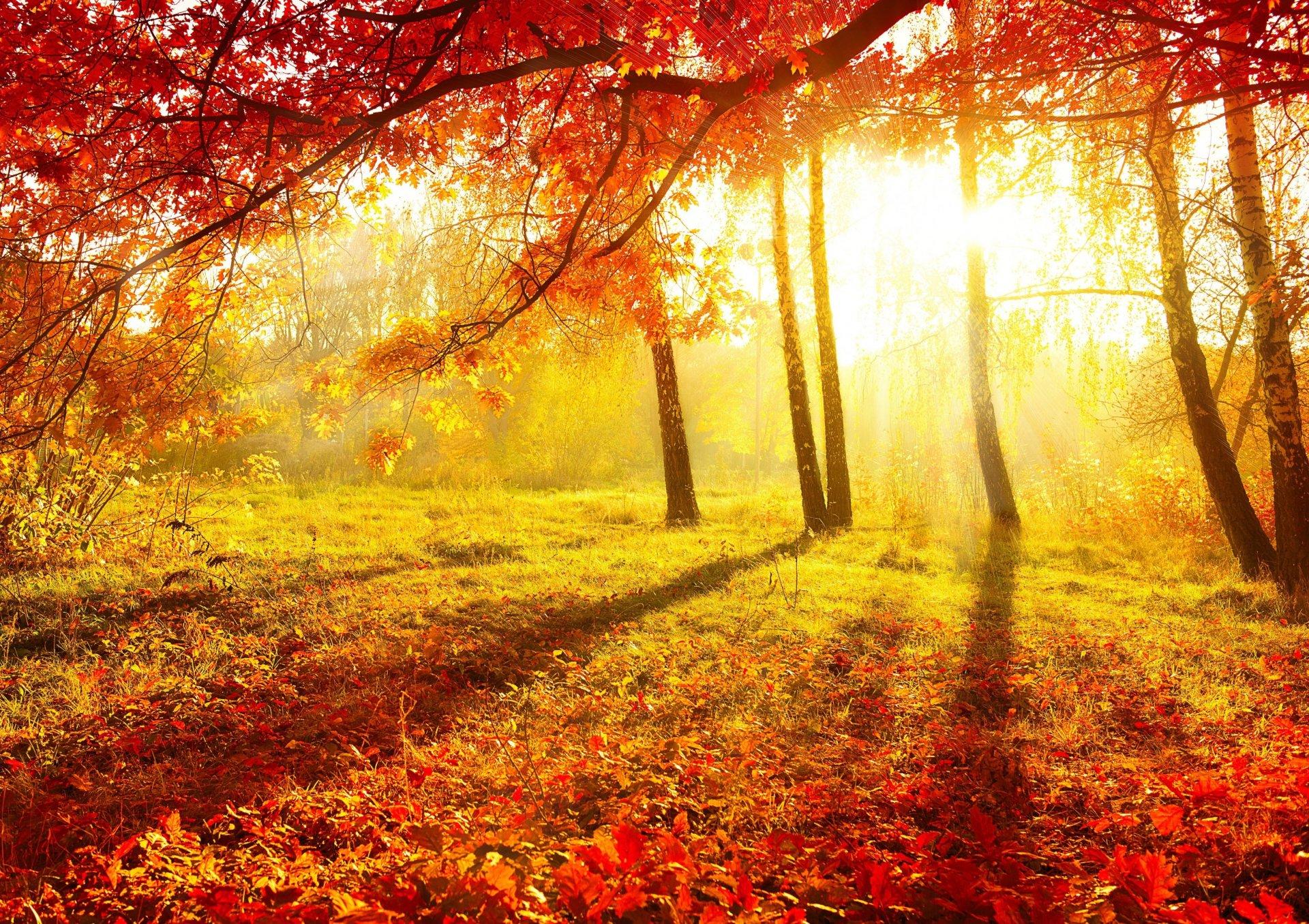 Обои красиво, осень. Природа foto 16
