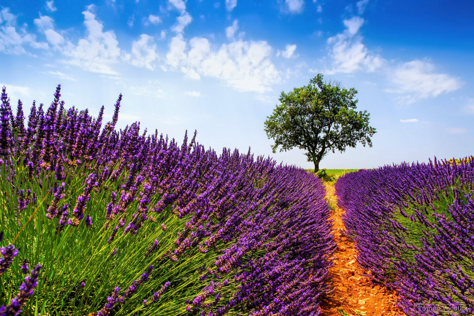 природа цветы деревья лаванда без смс