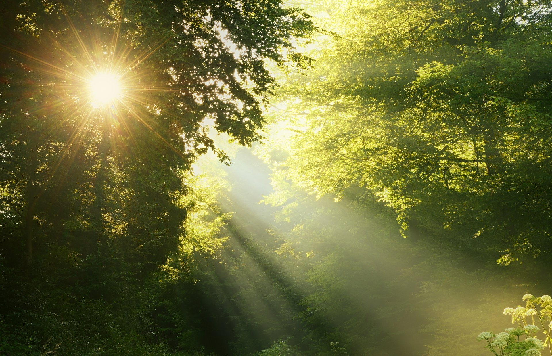 Ссылки, картинки восход солнца в лесу